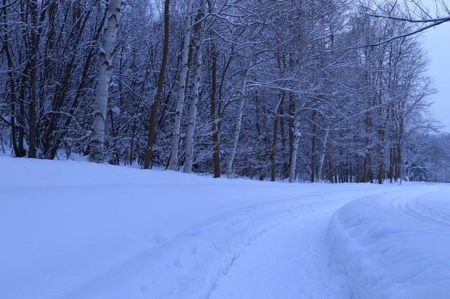 冬の森林.jpg