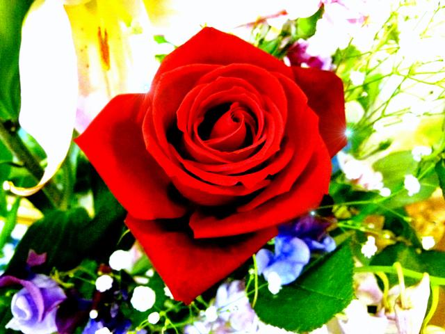 バラ 薔薇 花.jpg