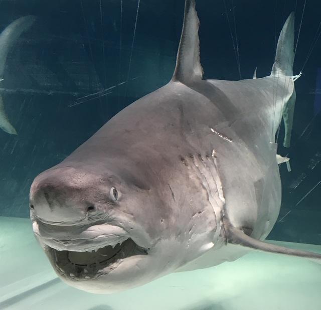ホルマリン漬け サメ.jpg