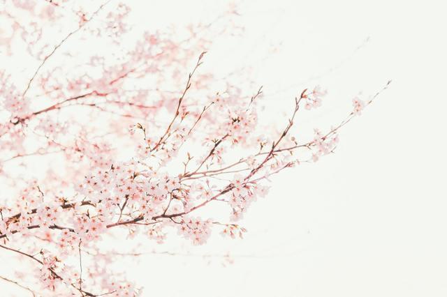 桜嵐記.jpg